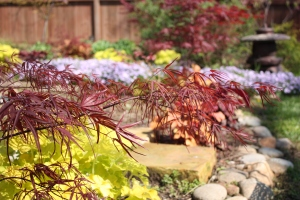 Lime heuchera and J. maple in forground, phlox behind