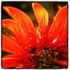 Red flower - unknown