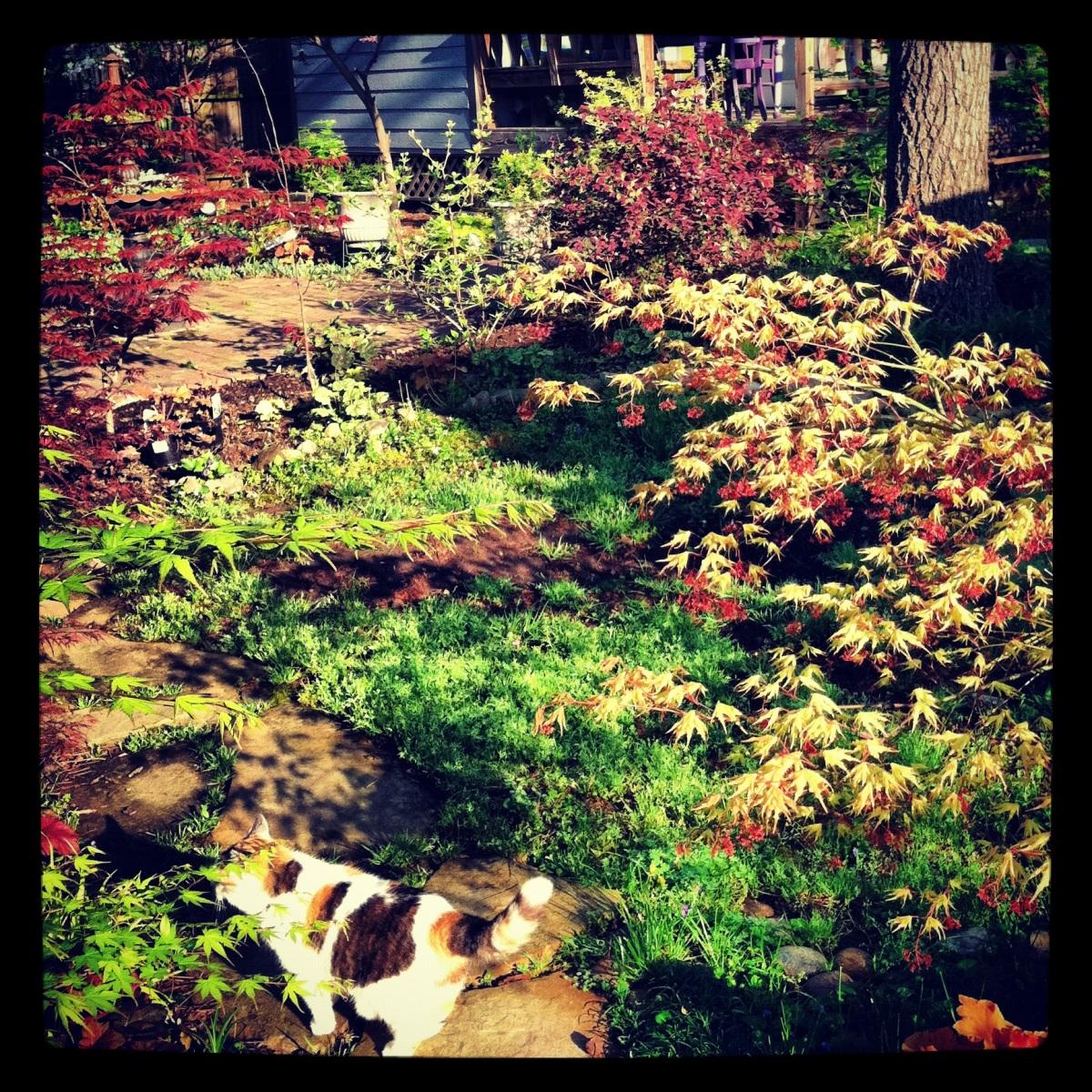 Otis's Garden
