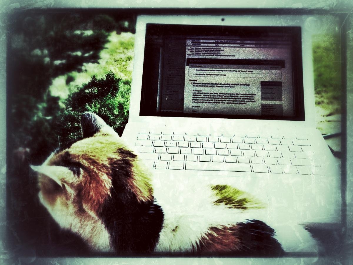 Laptop / Lapcat