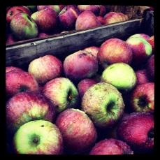 VT apples