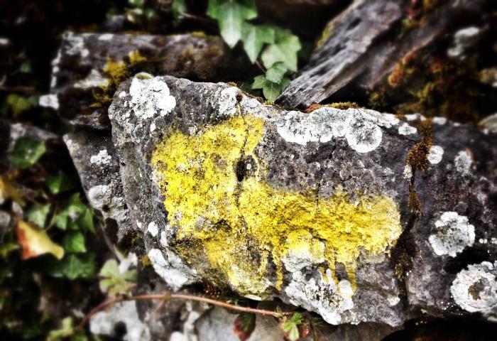 Galicia yellow arrow
