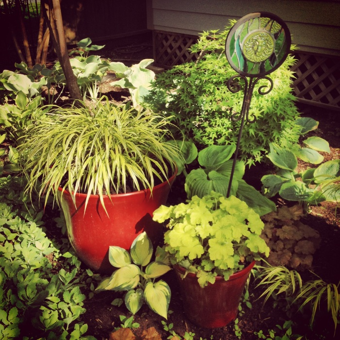 Potted hakone grass and heuchera