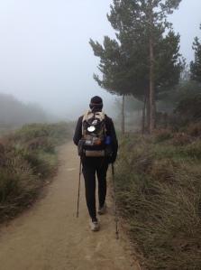 Hal in fog