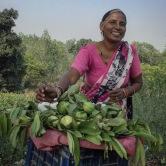 Beautiful guava seller